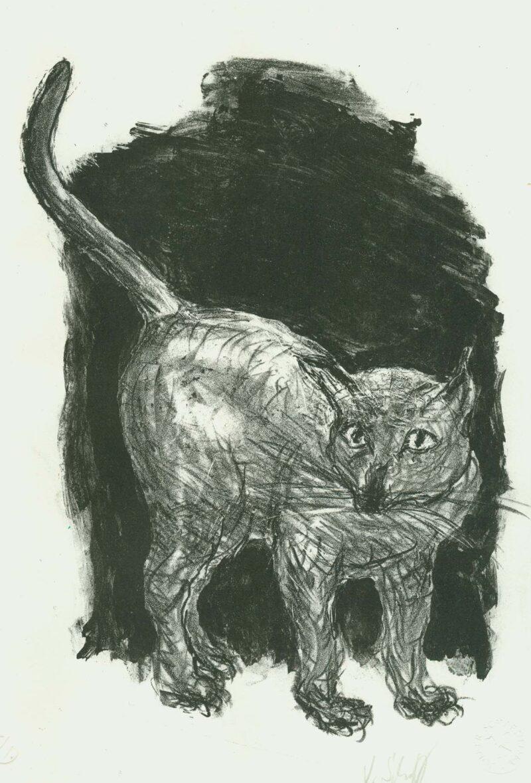 """Abbildung von """"Katz"""""""