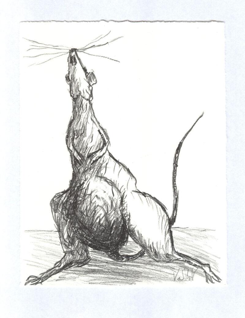 """Abbildung 1: """"Kleines Tier ganz groß"""" von Volker Scharnefsky"""