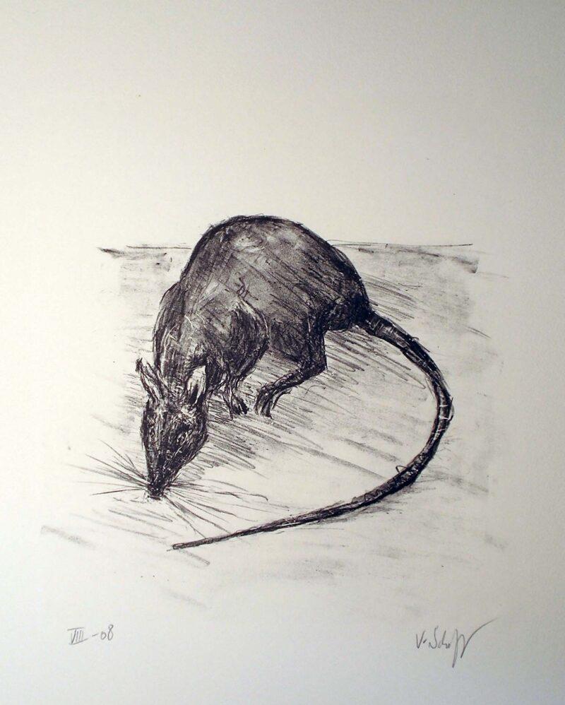 """Abbildung von """"Ratte"""""""
