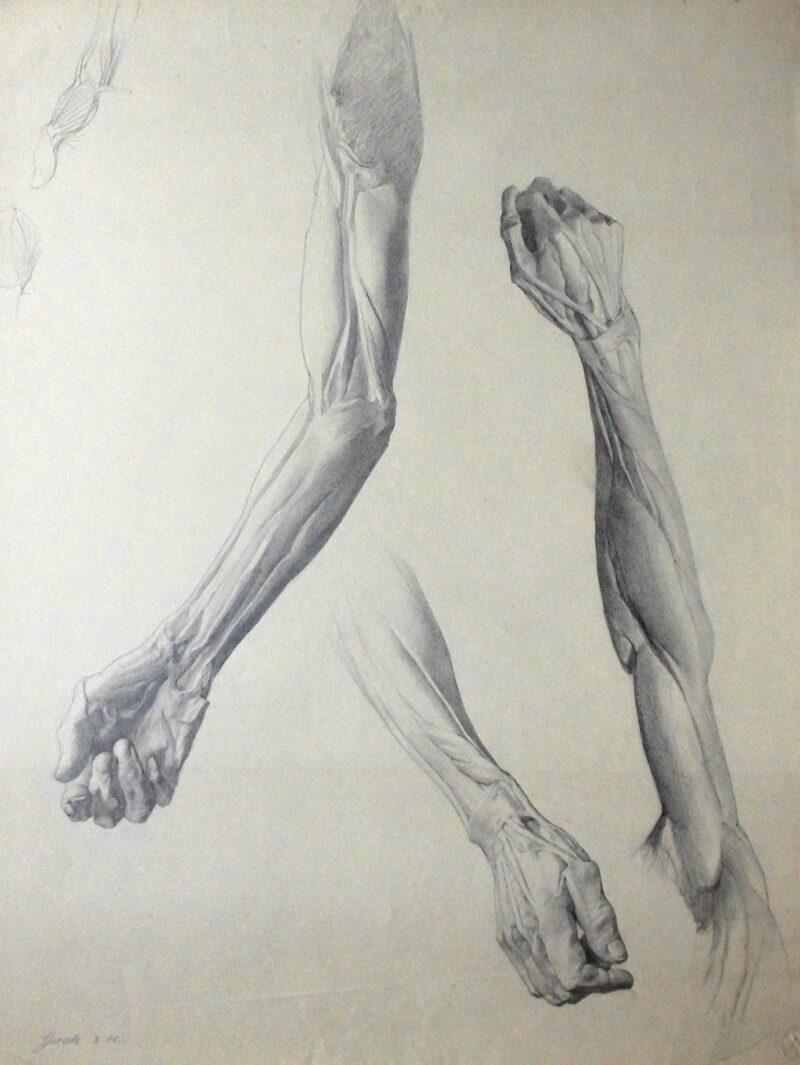 """Abbildung 1: """"Muskelstudie Arm, Hand (7514)"""" von Ernst Gock"""