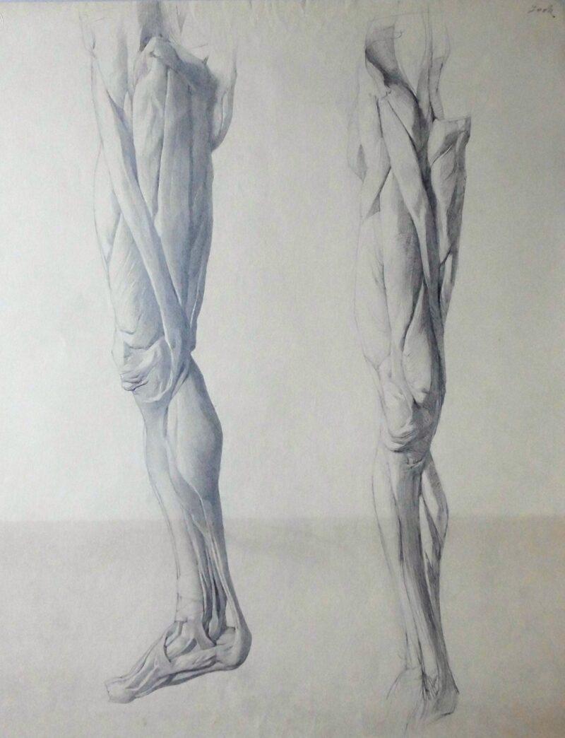 """Abbildung 1: """"Beinmuskulatur (8595)"""" von Ernst Gock"""
