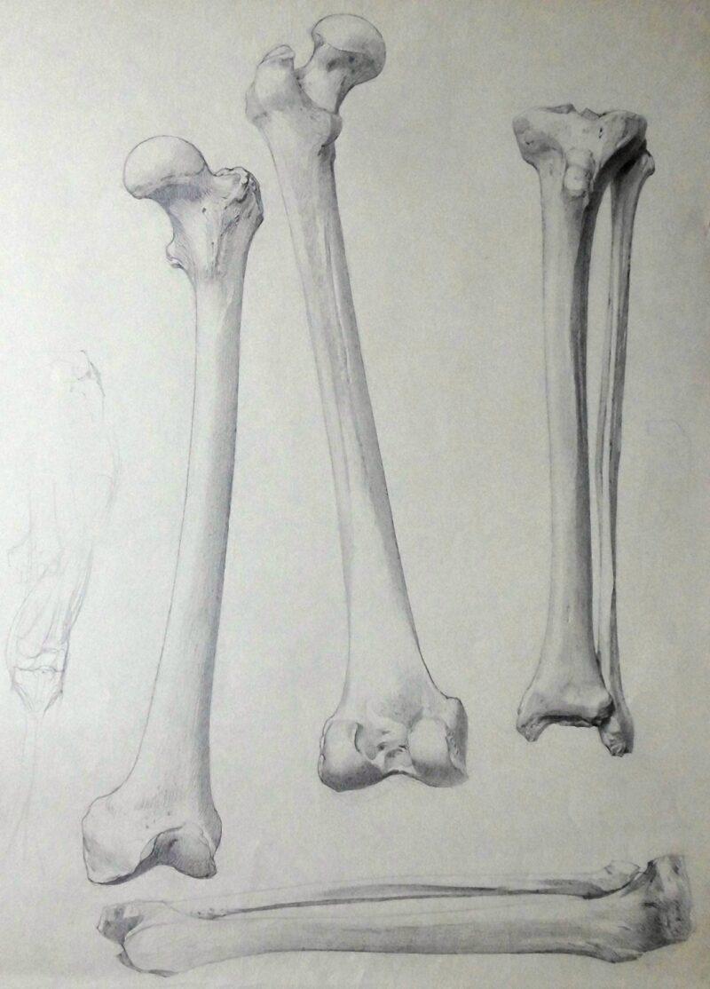 """Abbildung 1: """"Knochenstudie (8598)"""" von Ernst Gock"""