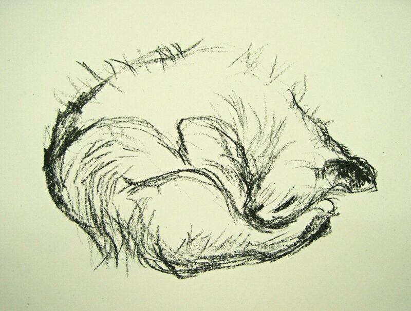 """Abbildung von """"Katze"""""""